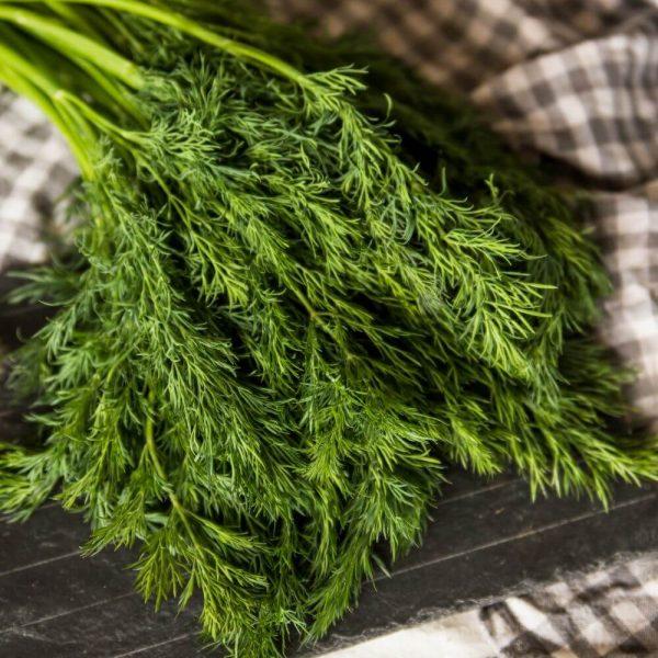 Укроп свежий - для салатов и любых блюд